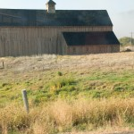 On the way to Netter's field trip, Elise saw a barn. And since she saw this, why not take a picture. Because barn's are really rare, like only 2 in existence.