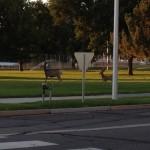 The deer crossed the street, jaywalked actually
