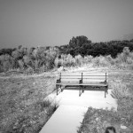I just loved this bench, all by it's lonesome.