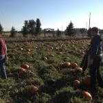 Scheming to find the best pumpkin